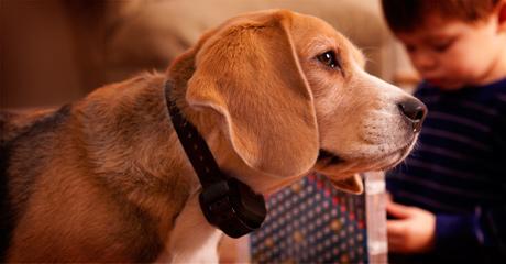 collar garmin barcklimiter-beagle.jpg